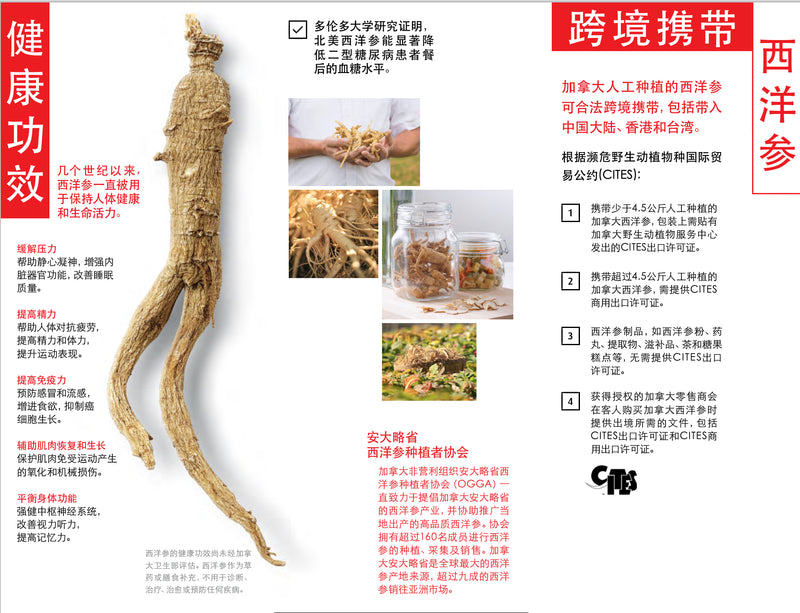加拿大服务-五年加拿大安省花旗参-小枝/ 5 Year Canadian Ginseng - Small Rootlet (Shipped within Canada)