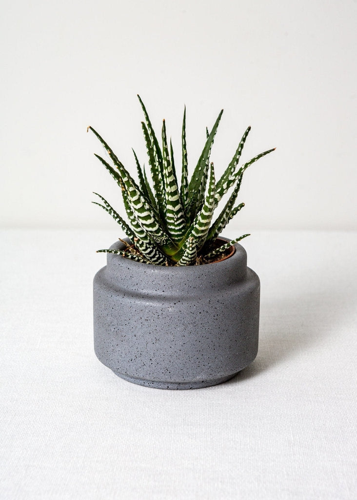 Speckled Concrete Planters - The Small Home