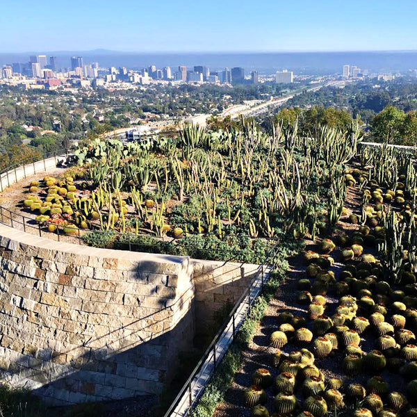 Round Up: Our Favorite LA #HAHT Spots
