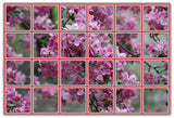"Snap n Crop Mosaic Moments Basic  Nested Die Set - Die MM 1"" Grid"