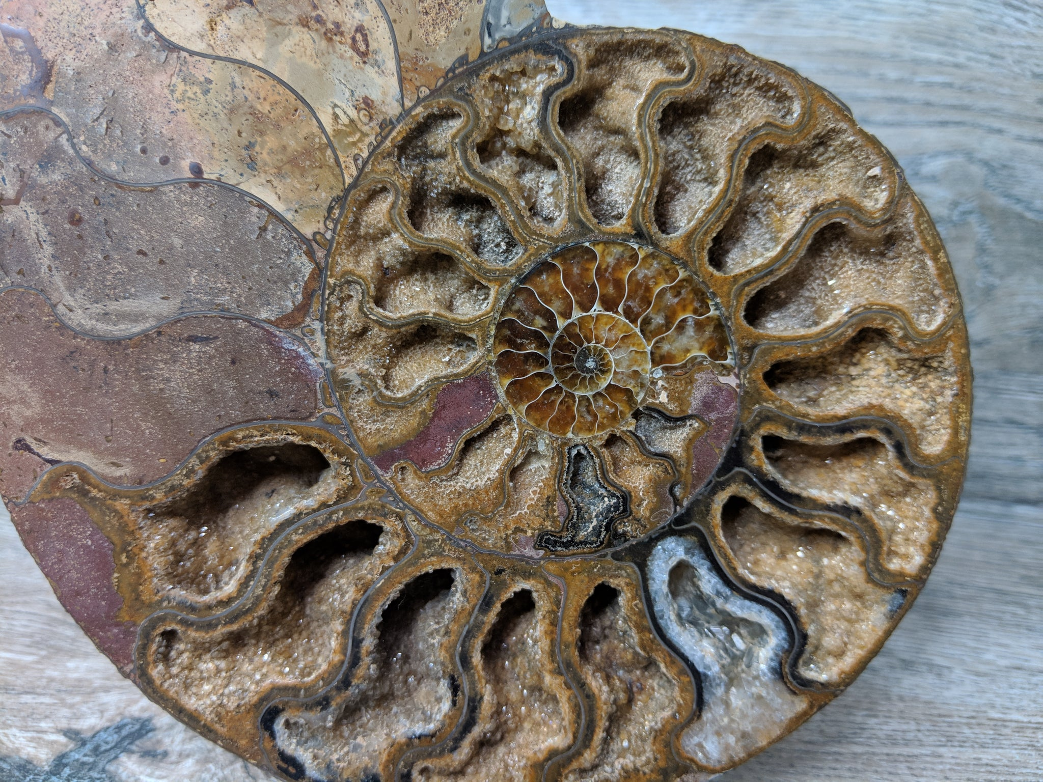 Stunning Ammonite Pair with Druzy & Quartz