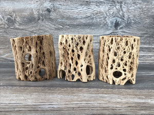 Cholla Cactus Wood Stand