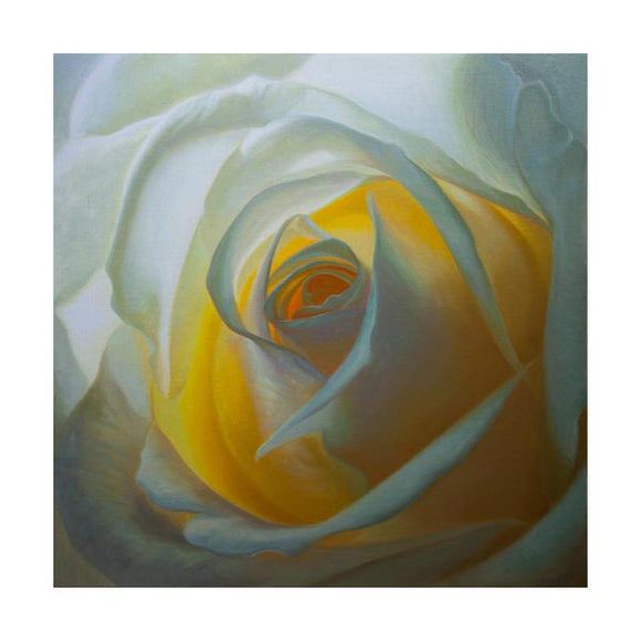 White Rose Paintings and Prints