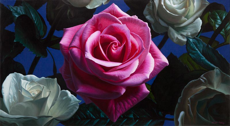 Red and white rose oil painting by Vincent Keeling