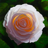 White rose prints by Vincent Keeling after his painting titled Solar Rose