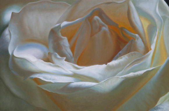 Oil painting of a white rose, called The Unfolding, by Vincent Keeling