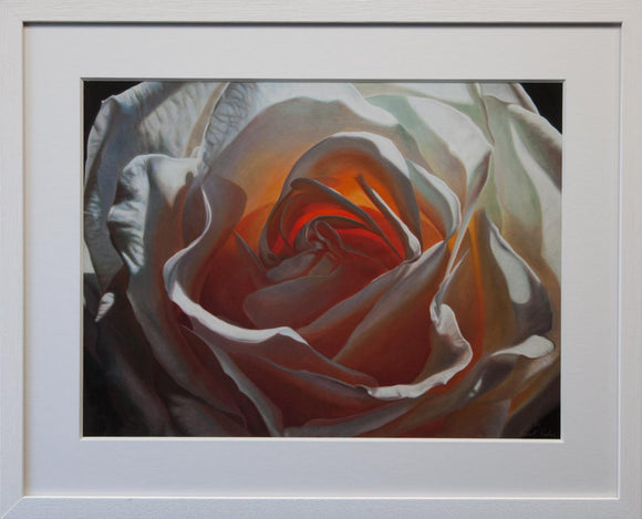 Framed white rose print, taken from a painting by Vincent Keeling