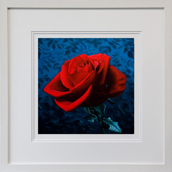 Midnight Rose - Limited Edition Print