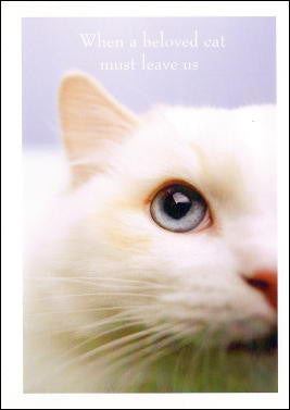 Beloved Cat Sympathy Card