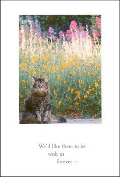 cat in wildflowers sympathy card