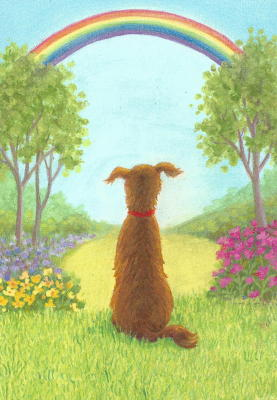 Dog Looking at Rainbow Sympathy Card