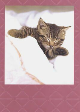 Kitten Get Well Card