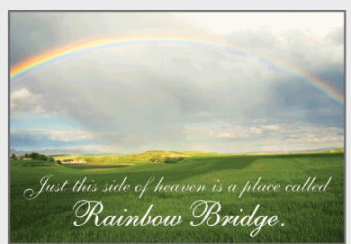 Rainbow Bridge Dog Sympathy Card