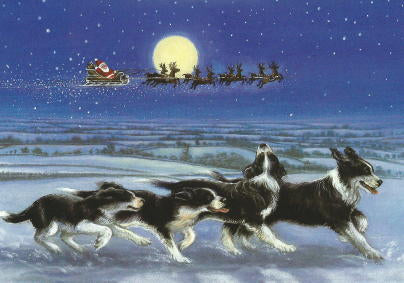 "Border Collie Christmas Cards ""chasing Santa"""