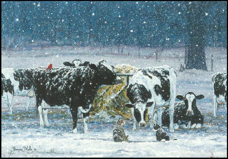 Cow Christmas Cards