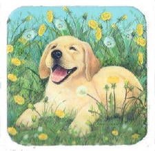 Dandelion Puppy Yellow Lab Coasters