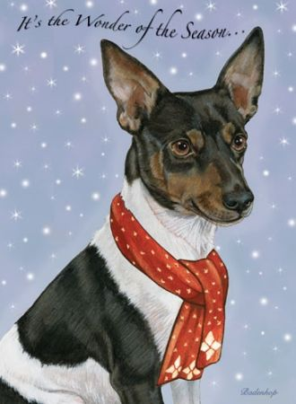 Rat Terrier Christmas Cards
