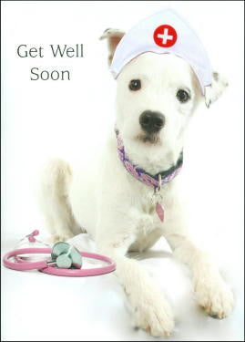 Dog Get Well Card