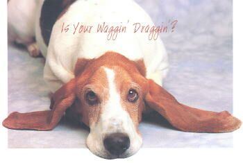Basset Hound Get Well Card
