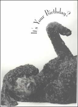 Black Poodle Birthday Card