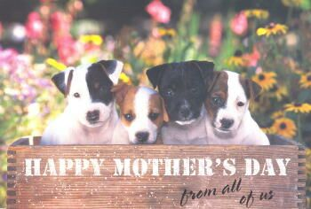 Jack Russell Terrier Puppies Mother's Day Card