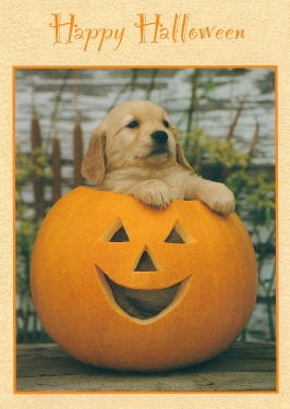 Golden Retriever Puppy Halloween Card
