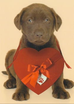 Chocolate Lab Puppy Valentine's Card