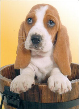 Basset Hound Friendship Card
