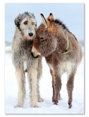 Irish Wolfhound & Donkey Christmas Cards