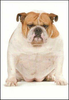 "Bulldog friendship card ""older and wider"""
