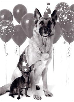 German Shepherd & Chihuahua Birthday Card