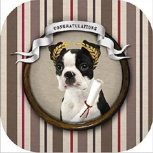 Boston Terrier Frienship/Congratulations Card