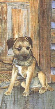 Border Terrier Note Card