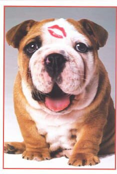 Bulldog Friendship ~ Romance Card