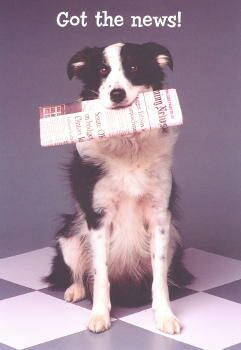 Border Collie Congratulations Card