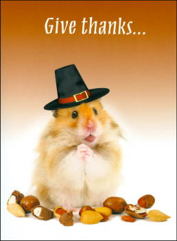 Hamster Thanksgiving Card