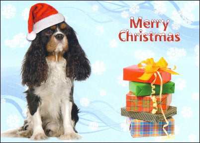 Cavalier King Charles Christmas Cards - Tricolor