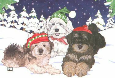 Havanese Christmas Cards