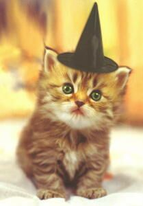 Kitten Halloween Card