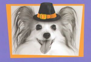 Papillon Thanksgiving Card