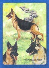 German Shepherd Playing Cards
