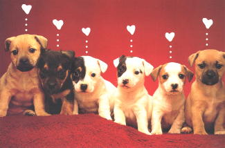 Puppy Valentine's Card