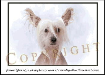"Chinese Crested Note Card ""Glamour"""