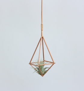 Air Plant via Curated Made