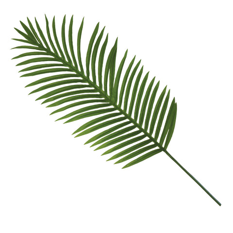 Areca palm leaf 1m