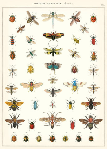 Cavallini - Natural History Insects - Wrapping Paper / Poster