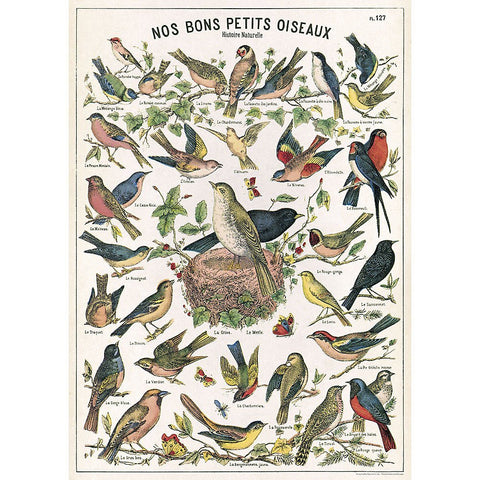 Cavallini - Bird Chart - Wrapping Paper / Poster