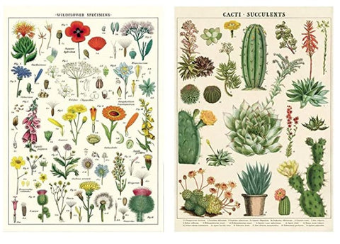 Cavallini Wrap - Succulents & Wildflowers - 2 x Poster Set
