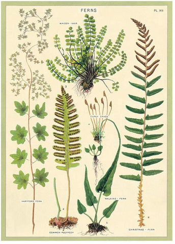 Cavallini - Ferns - Wrapping Paper / Poster
