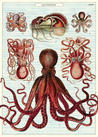 Cavallini - Octopods - Wrapping Paper / Poster
